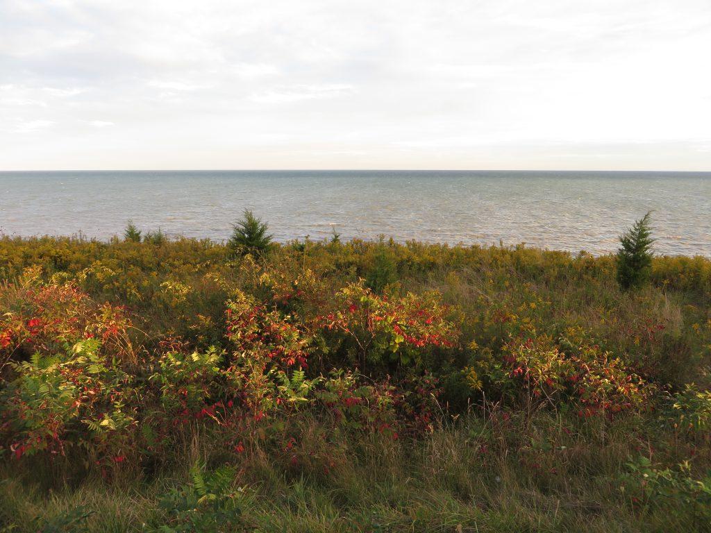 File:Lake Erie from Chatham-Kent Highway 3, Chatham-Kent, Ontario (21784037401).jpg